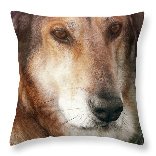 Dog Throw Pillow featuring the photograph Murphy by JAMART Photography