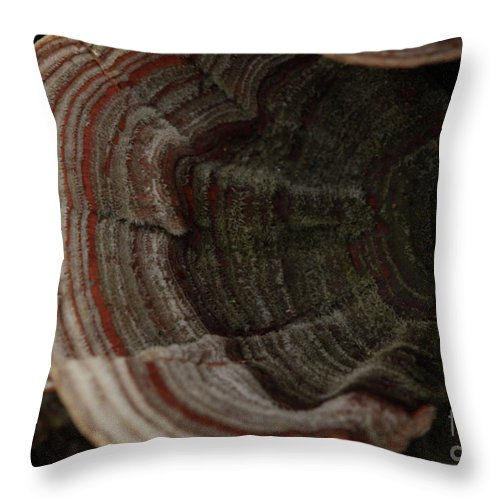 Mushroom Photography Throw Pillow featuring the photograph Mushroom Shells by Kim Henderson