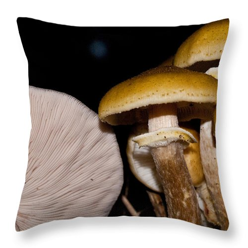 Mushrooms Throw Pillow featuring the photograph Mushrooms At Sundown by Douglas Barnett