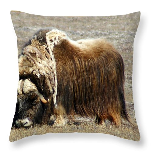 Musk Ox Throw Pillow featuring the photograph Musk Ox by Anthony Jones