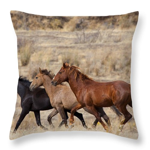 Horses Throw Pillow featuring the photograph Mustang Trio by Mike Dawson