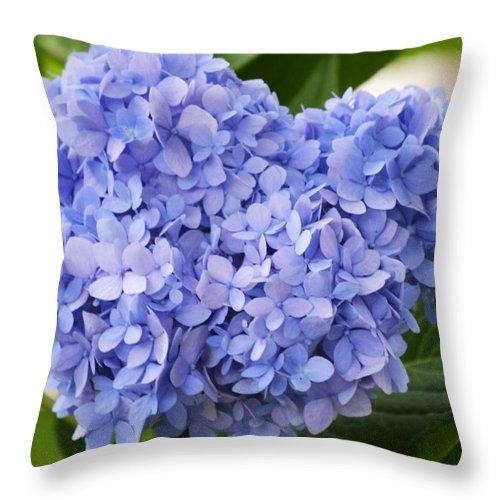 Hydrangea Throw Pillow featuring the photograph My Blue Heart by Melanie Moraga