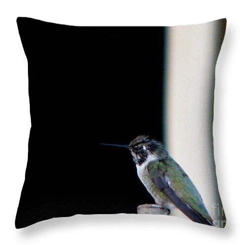 Patzer Throw Pillow featuring the photograph My Friend Stop By by Greg Patzer