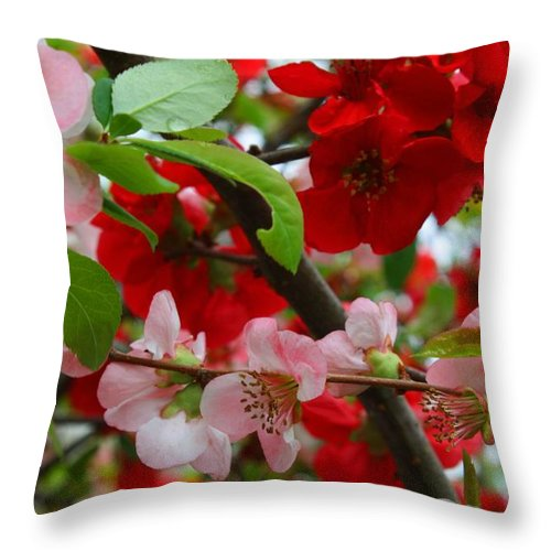Quince Throw Pillow featuring the photograph My Two Quince Worth by Kathryn Meyer