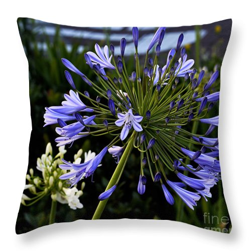 Clay Throw Pillow featuring the photograph Naked Lady by Clayton Bruster
