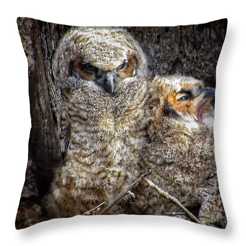 Great Horned Owl Throw Pillow featuring the photograph Nap time by Rrrose Pix