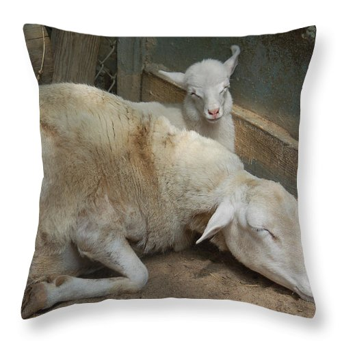 Sheep Throw Pillow featuring the photograph Nap Time by Suzanne Gaff