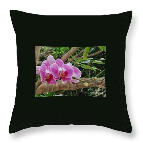 Flowers Throw Pillow featuring the photograph Naples Orchid 1 by Pam Schmitt
