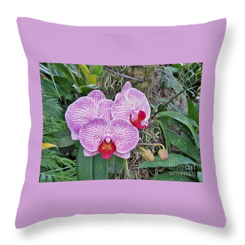 Flowers Throw Pillow featuring the photograph Naples Orchid 4 by Pam Schmitt