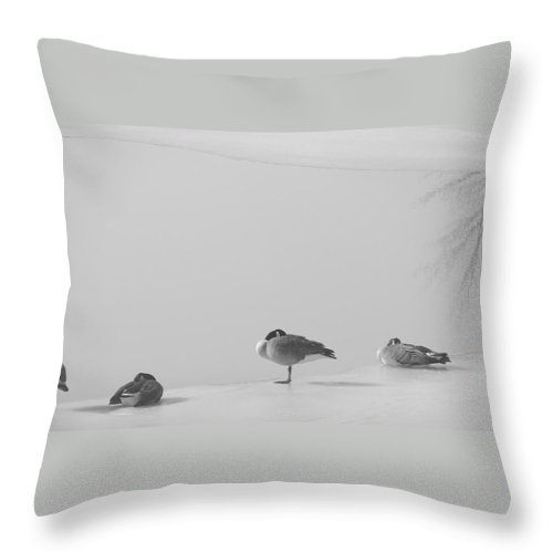 Throw Pillow featuring the photograph Napping On Ice by Luciana Seymour