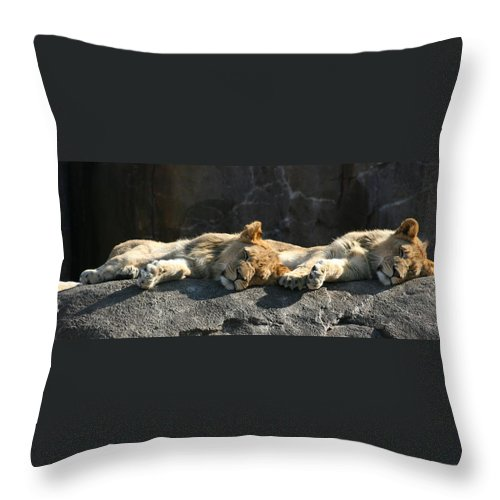 Cat Throw Pillow featuring the photograph Naptime For The Twins by David Dunham