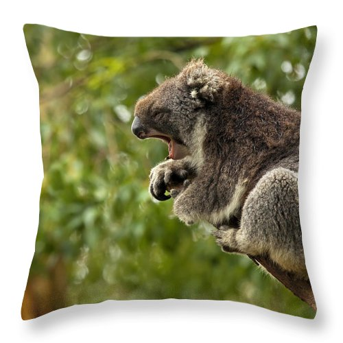 Koala Throw Pillow featuring the photograph Naptime by Mike Dawson