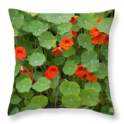 Nasturtiums Throw Pillow featuring the photograph Nasturtiums by Gale Cochran-Smith