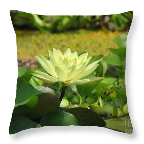 Nature Throw Pillow featuring the photograph Nature by Amanda Barcon