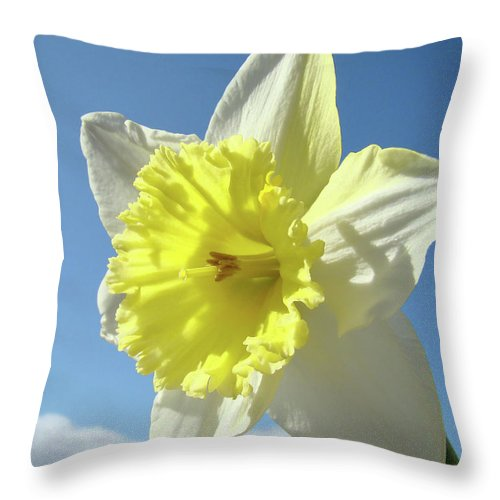 �daffodils Artwork� Throw Pillow featuring the photograph Nature Daffodil Flowers Art Prints Spring Nature Art by Baslee Troutman