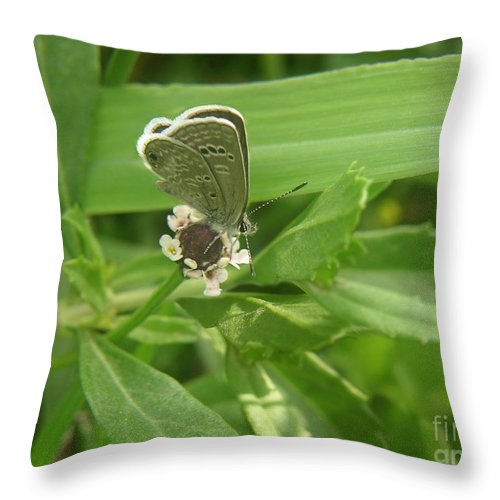 Nature Throw Pillow featuring the photograph Nature In The Wild - A Floral Perch by Lucyna A M Green