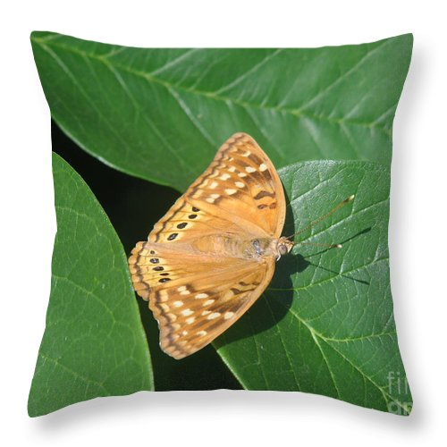 Nature Throw Pillow featuring the photograph Nature In The Wild - A Green Haven by Lucyna A M Green