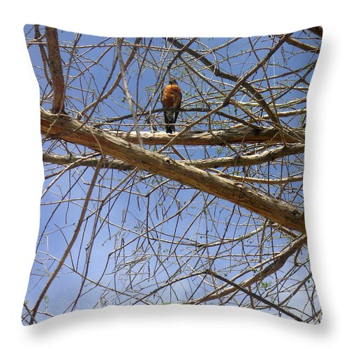 Nature Throw Pillow featuring the photograph Nature In The Wild - Annoucing Spring by Lucyna A M Green