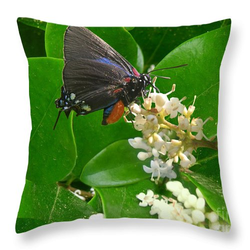 Nature Throw Pillow featuring the photograph Nature In The Wild - Beautiful In Black by Lucyna A M Green