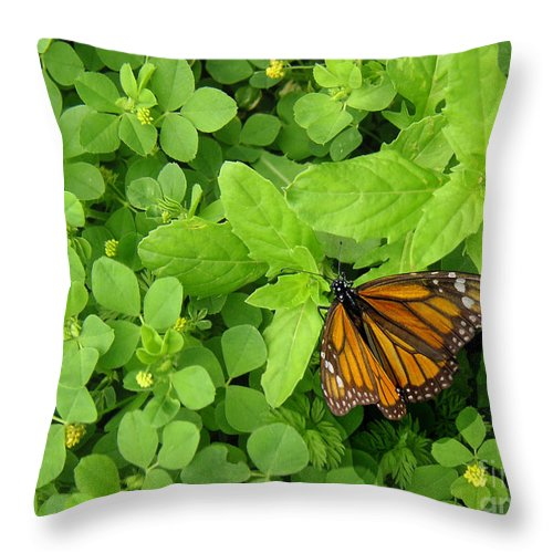 Nature Throw Pillow featuring the photograph Nature In The Wild - Beautiful Solitude by Lucyna A M Green