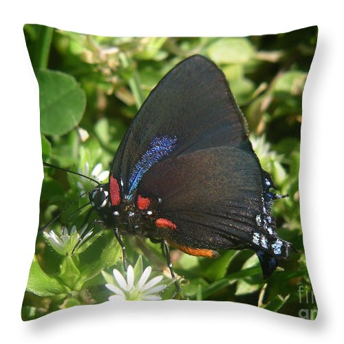 Nature Throw Pillow featuring the photograph Nature In The Wild - Black Beauty by Lucyna A M Green