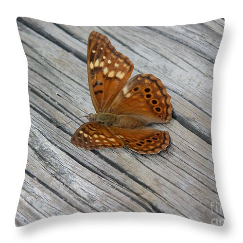 Nature Throw Pillow featuring the photograph Nature In The Wild - Fall Colors by Lucyna A M Green