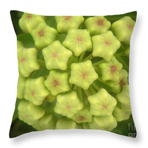 Nature Throw Pillow featuring the photograph Nature In The Wild - Flowering Wildly by Lucyna A M Green