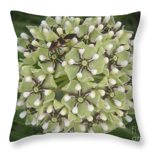 Nature Throw Pillow featuring the photograph Nature In The Wild - In Its Own World by Lucyna A M Green