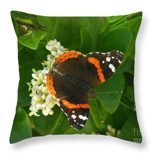 Nature Throw Pillow featuring the photograph Nature In The Wild - Landing Perfectly by Lucyna A M Green