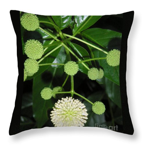 Nature Throw Pillow featuring the photograph Nature In The Wild - Natural Pom Poms by Lucyna A M Green