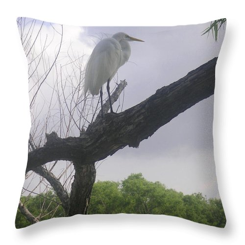 Nature Throw Pillow featuring the photograph Nature In The Wild - Scanning The Horizon by Lucyna A M Green