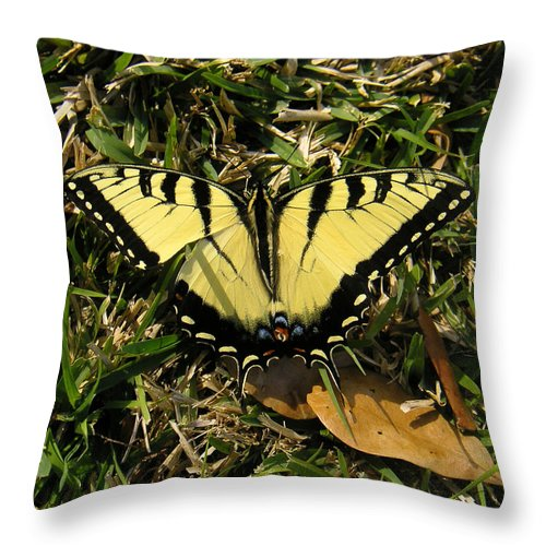 Nature Throw Pillow featuring the photograph Nature In The Wild - Splendor In The Grass by Lucyna A M Green
