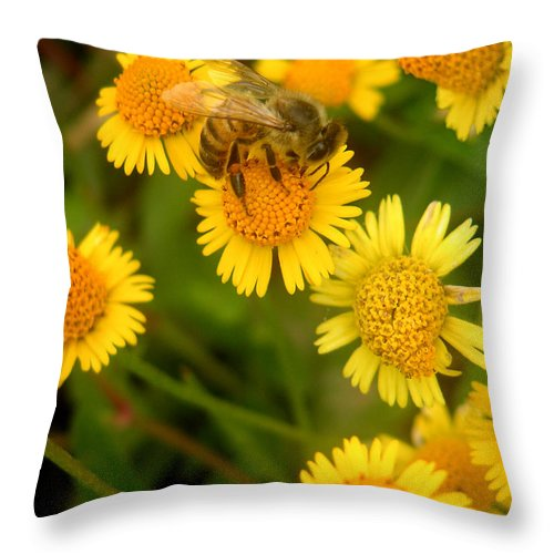 Nature Throw Pillow featuring the photograph Nature In The Wild - The Nectar Company by Lucyna A M Green