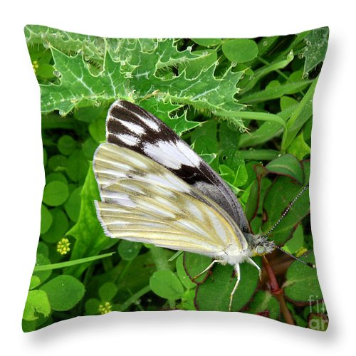 Nature Throw Pillow featuring the photograph Nature In The Wild - Visiting With The Greens by Lucyna A M Green