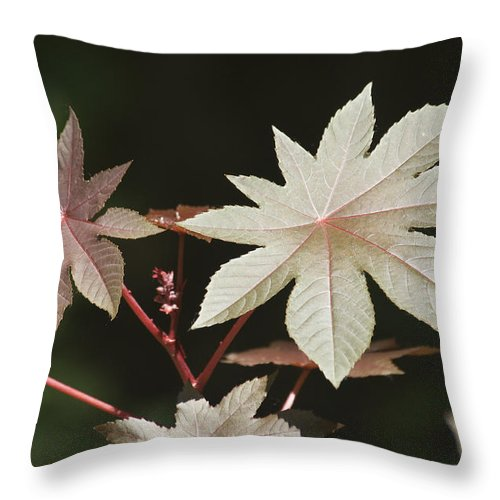 Plant Throw Pillow featuring the photograph Natures Beauty by Chad Davis