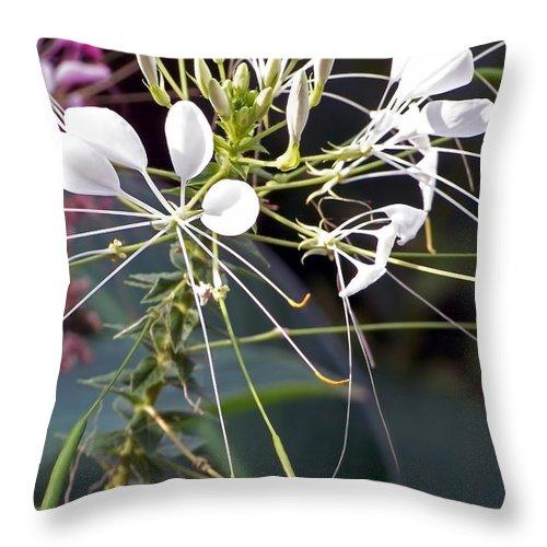 Lauren Radke Throw Pillow featuring the photograph Nature's Design by Lauren Radke
