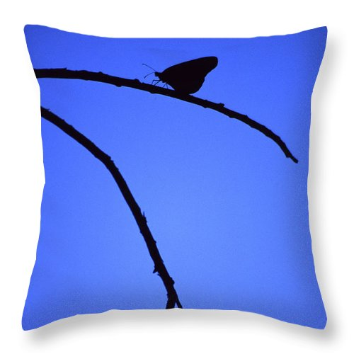 Nature Throw Pillow featuring the photograph Natures Elegance by Randy Oberg