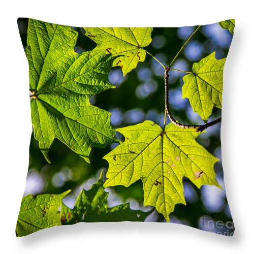 Fall Throw Pillow featuring the photograph Natures Going Green Design by Michael Arend
