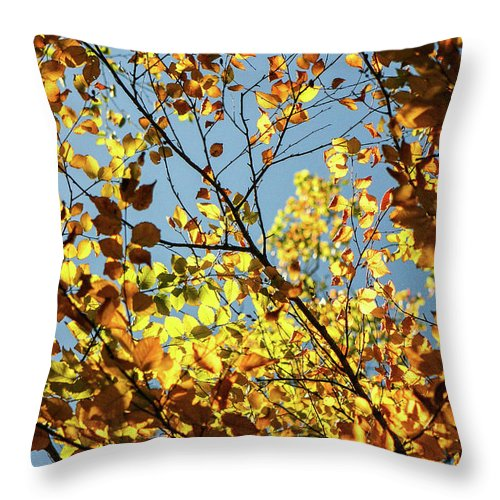 Autumn Throw Pillow featuring the photograph Natures Gold by Martina Schneeberg-Chrisien