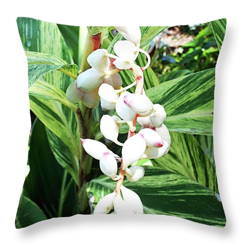 Florida Throw Pillow featuring the photograph Nature's Next Creation Gp by Chris Andruskiewicz