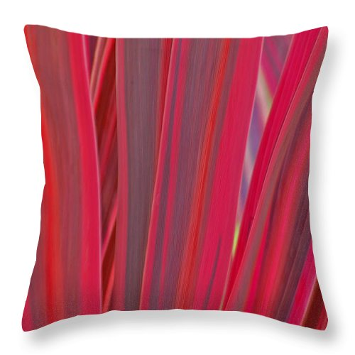 Pink Throw Pillow featuring the photograph Nature's Palette by Jean Booth
