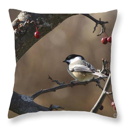 Bird Throw Pillow featuring the photograph Natures Small Wonders by Deborah Benoit