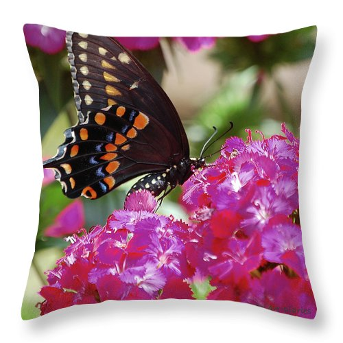 Butterfly Throw Pillow featuring the digital art Nectar Of Pink Passion by DigiArt Diaries by Vicky B Fuller