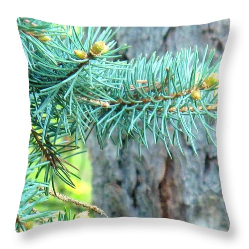 Pine Throw Pillow featuring the photograph Needles by Ian MacDonald
