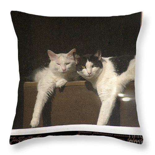 Clay Throw Pillow featuring the photograph Neighborhood Watch by Clayton Bruster