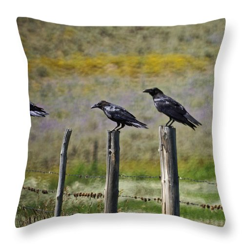 Crows Throw Pillow featuring the photograph Neighborhood Watch Crows by Heather Coen