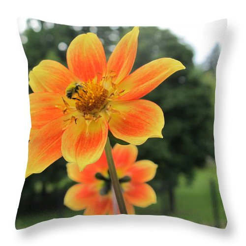 Flower Throw Pillow featuring the photograph Neon Orange Flower by Cindy Kellogg