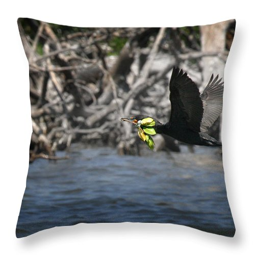 Double Crested Cormorant Throw Pillow featuring the photograph Nest Building Flaps Up by Joseph G Holland