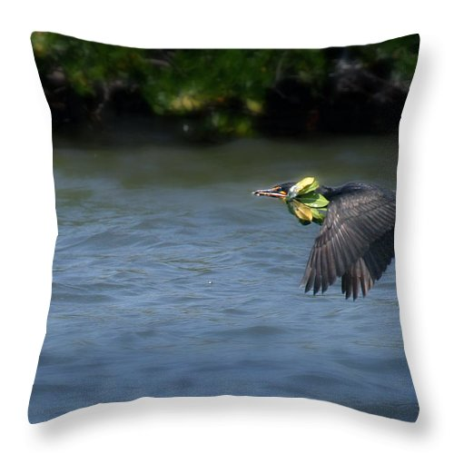 Double Crested Cormorant Throw Pillow featuring the photograph Nest Building by Joseph G Holland