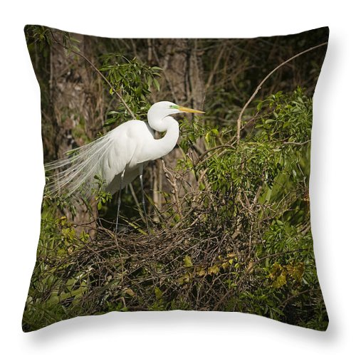 Bird Throw Pillow featuring the photograph Nesting Beauty by Chad Davis